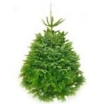 nordsman non drop christmas tree